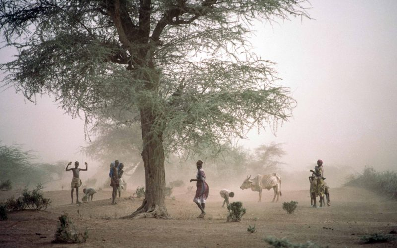 Ecocriticism: Conservation in East Africa